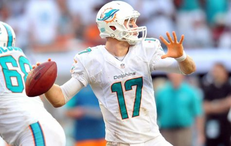 Jay Cutler Signed By Dolphins As Fill For Tannehill