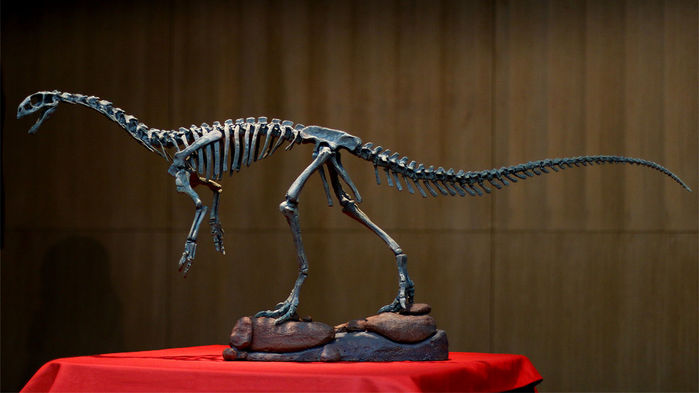Chilesaurus Theory Changes What We Used to Think About Dinosaurs