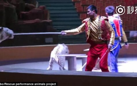 Chinese Animal Trainers Abuse Circus Animals