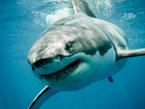 Shark Attacks: Could It Be Bad Luck or Something Else?